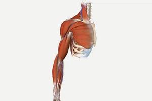Abdomen Anatomy for Medical students