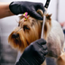 Diploma in Dog Grooming
